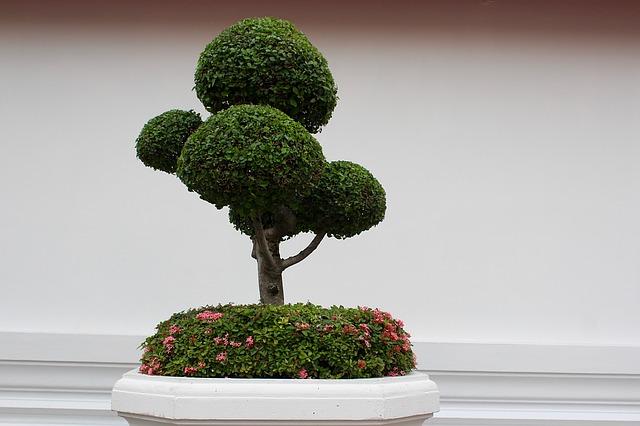 Bonsai Bäumchen