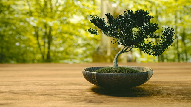 Bonsai Caring