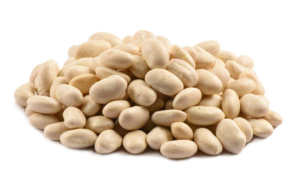 how to grow great northern beans