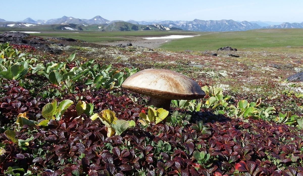 Tundra Plants All Things You Need To Know About Them